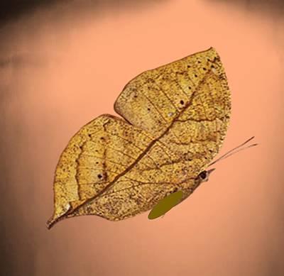 Painting - Image9 by Belinda Threeths
