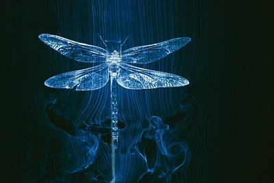 Aerodynamics Photograph - Imagery Of A Dragonfly In A Wind Tunnel by Paul Chesley