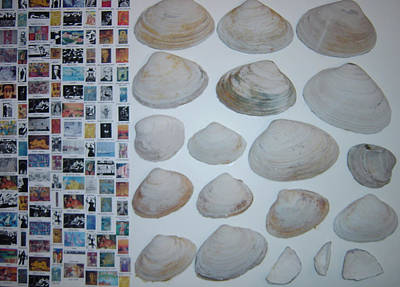 Images And Shells Art Print by Biagio Civale