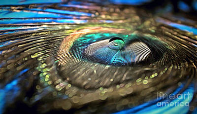 Peacock Photograph - Imagine If by Krissy Katsimbras