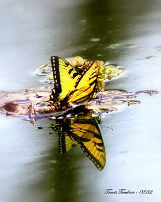 Granger - IMG_0352 - Tiger Swallowtail by Travis Truelove