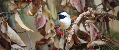Photograph - Img_0484-005 - Carolina Chickadee by Travis Truelove
