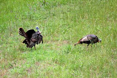 Photograph - Img_0951-001 - Wild Turkey by Travis Truelove
