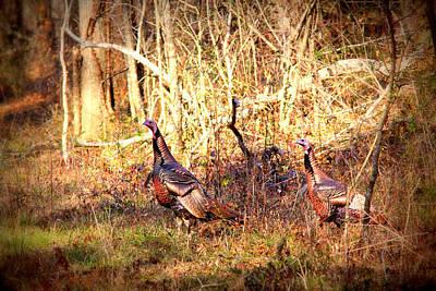 Photograph - Img_1000 - Wild Turkey by Travis Truelove