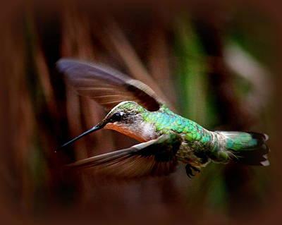 Photograph - Img_1665-001 - Ruby-throated Hummingbird by Travis Truelove