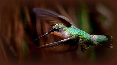 Photograph - Img_1665 - Ruby-throated Hummingbird Mug by Travis Truelove