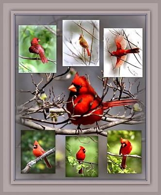 Photograph - Img_3003-004 - Northern Cardinal by Travis Truelove