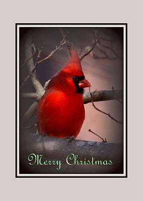 Img_3158-005 - Northern Cardinal Christmas Card Art Print