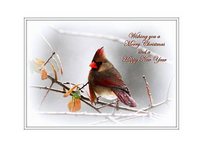 Photograph - Img_3272-018 - Northern Cardinal by Travis Truelove