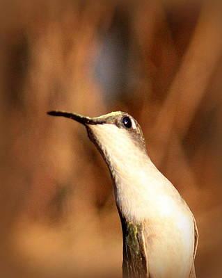 Photograph - Img_4668 - Ruby-throated Hummingbird by Travis Truelove