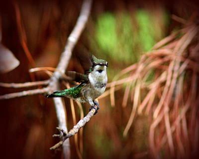 Photograph - Img_5274-004 - Ruby-throated Hummingbird by Travis Truelove