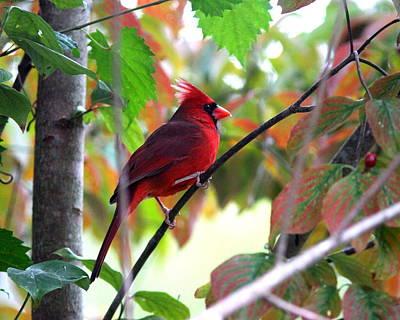 Keith Richards - IMG_7141 - Northern Cardinal by Travis Truelove
