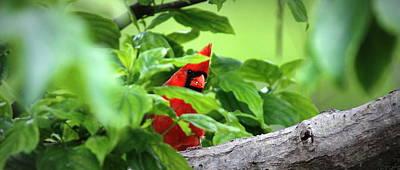 Photograph - Img_8732 - Mug - Northern Cardinal by Travis Truelove