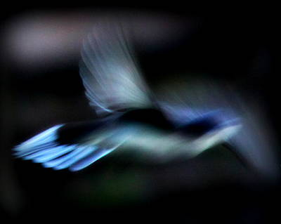 Photograph - Img_8932 - Nature In Motion by Travis Truelove