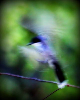 Photograph - Img_9024 - Nature In Motion by Travis Truelove