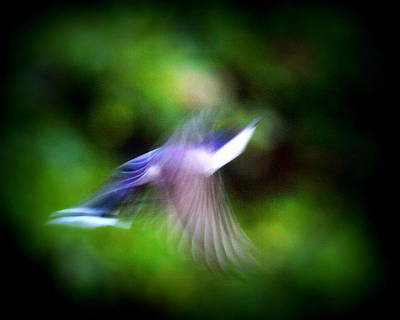 Photograph - Img_9089 - Nature In Motion by Travis Truelove