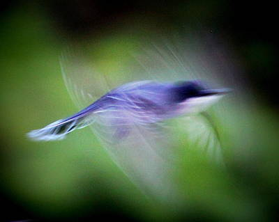 Photograph - Img_9212 - Nature In Motion by Travis Truelove