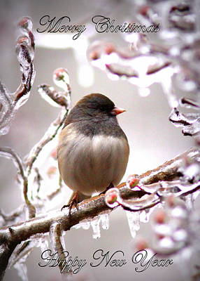 Impressionist Landscapes - IMG_9829-006 - Junco by Travis Truelove