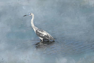 Photograph - Immature Little Blue Heron by Donna Kennedy