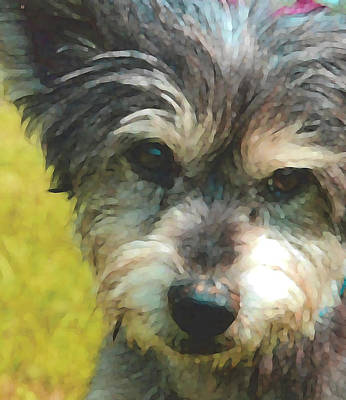 Tiny Dog Digital Art - Imogee Cute by Wide Awake Arts