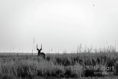 Impala Silhouette Black And White Art Print