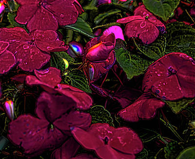 Digital Art - Impatiens Glow by Aliceann Carlton