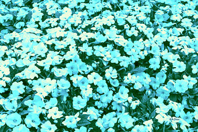 Photograph - Impatiens Indulgence Blue by Mike Braun