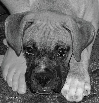 Boxer Puppy Digital Art - Impawsible by DigiArt Diaries by Vicky B Fuller