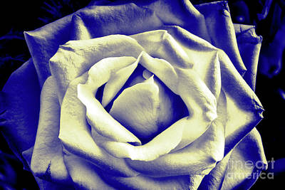 Photograph - Imperfect Rose by Jim Orr