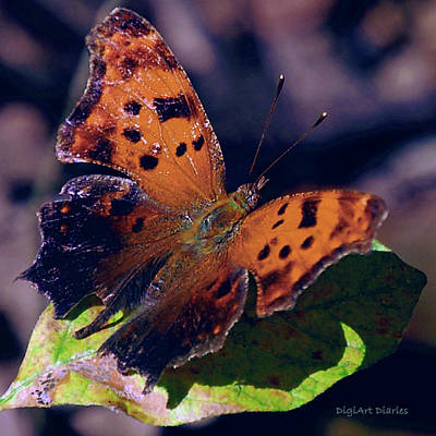 Purple Flowers Digital Art - Imperfect Satyr Comma by DigiArt Diaries by Vicky B Fuller
