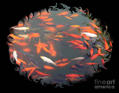 Good Luck Photograph - Imperial Koi Pond With Black Swirling Frame by Carol Groenen