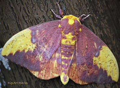 Moth-butterflies Digital Art - Imperial Moth by DigiArt Diaries by Vicky B Fuller