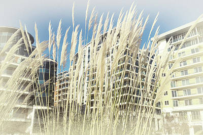 Photograph - Imperial Wharf Buildings by Judi Saunders