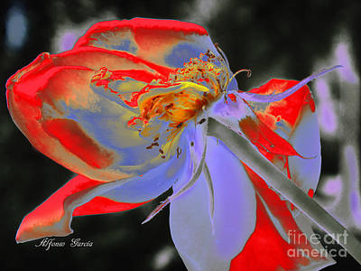 Photograph - Impresion Floral by Alfonso Garcia