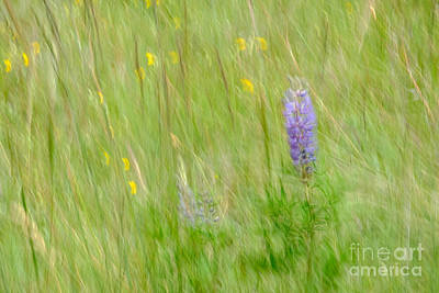 Photograph - Impression Of A Wildflower Meadow by Marianne Jensen