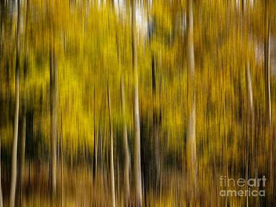 Photograph - Impression Of Autumn by Elijah Knight
