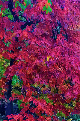 Nirvana - Impression of Fall Leaves and Trees  by Robert Ullmann