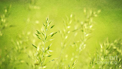 Meadows Mixed Media - Impression Of Grass by Angela Doelling AD DESIGN Photo and PhotoArt