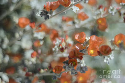 Photograph - Impressionism by Tamara Becker