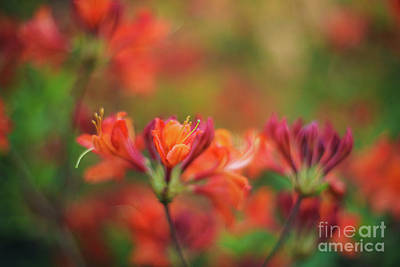 Photograph - Impressionist Azaleas Colors by Mike Reid