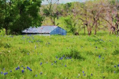 Digital Art - Impressionist Bluebonnets And Barn by Ellen Barron O'Reilly