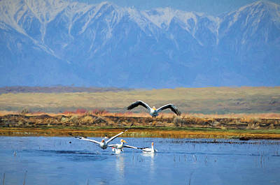 Photograph - Impressionist Pelicans And Peaks by Greg Norrell