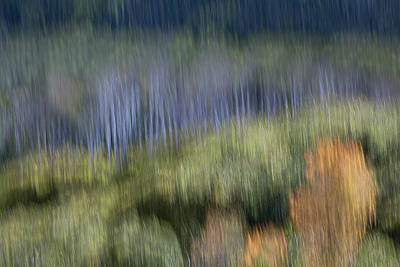 Photograph - Impressionist Spring Imaginings by Deborah Hughes