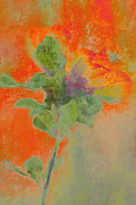 Photograph - Impressionist Style Tulip Tree Flower by Suzanne Powers