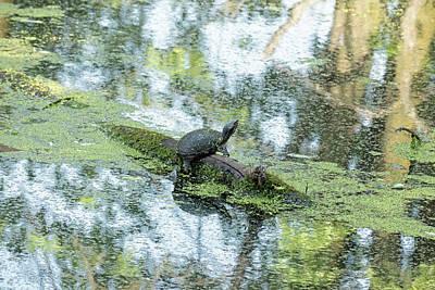 Photograph - Impressionist Turtle by Bill Jordan