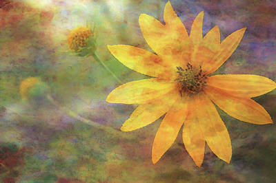 Photograph - Impressionist Yellow Wildflower And Buds 5636 Idp_2 by Steven Ward