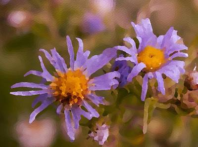 Photograph - Impressionistic Asters by Kathryn Whitaker