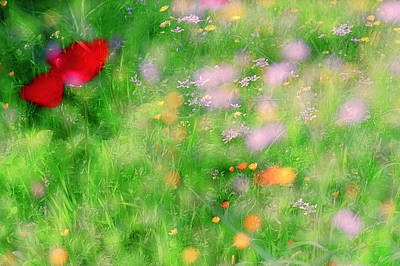 Photograph - Impressionistic Blossom 5 At Britain Park by Dubi Roman