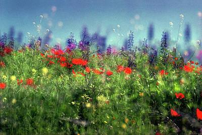 Photograph - Impressionistic Springtime by Dubi Roman