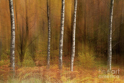 Icm Photograph - Impressions And Blurred Lines by Martin Williams